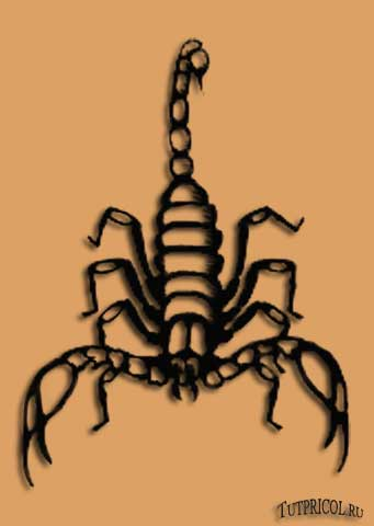 Эскиз татуировки скорпион