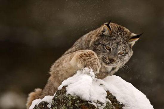 Красивые животные 30 фото в закладки